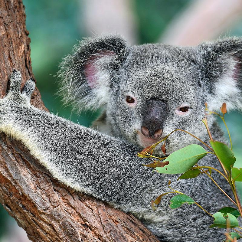 Australia   Desiderando Viaggiare