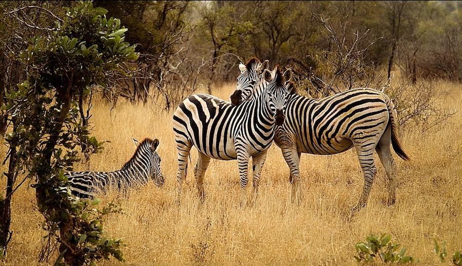 Kenya   Desiderando Viaggiare